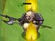 Arcanas Defender
